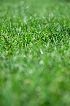 Free Cut Grass Royalty Free Stock Photo - 15659025