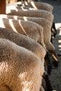 Free Feeding Time Royalty Free Stock Photos - 15663448
