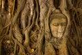 Free Stone Buddha Head On The Tree Root Royalty Free Stock Photography - 15666957