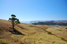 Free Coromandel Peninsula Stock Images - 15661044