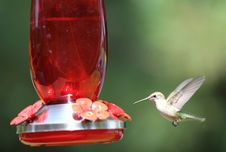 Free A Hummingbird Mid-flight By The Feeder Royalty Free Stock Photos - 15661168