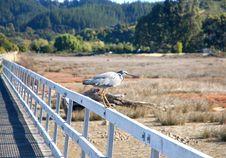Heron In Abel Tasman Stock Photos
