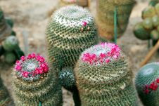 Free Cactus Stock Photography - 15663632