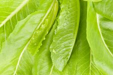 Free Green Salads Leaves Royalty Free Stock Photography - 15665737