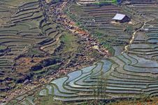Free Rice Fields Sapa Vietnam Stock Photos - 15667693