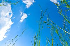 Free Green Grass Stock Image - 15668161