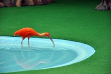 Free Bird Shadow Stock Image - 15668241
