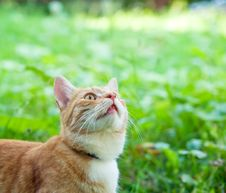 Free Kitten Stock Photography - 15669052