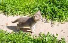 Free Little Kitten Stock Images - 15669054