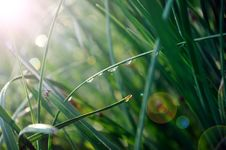 Free Drops Of Dew Stock Photo - 15669070