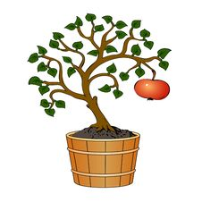 Free Apple Tree In Tub Stock Image - 15669251