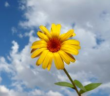 Free A Beautiful Yellow Flower Stock Photo - 15669420