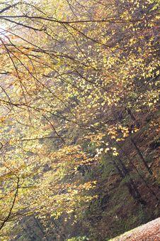 Free Autumn Branches Stock Photo - 15669590