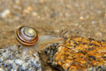 Free Snail On The Stone Royalty Free Stock Photo - 15670425