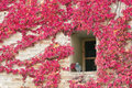 Free Japanese Creeper In Autumn Royalty Free Stock Photography - 15670607