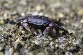 Free Rock Crab Macro Royalty Free Stock Photos - 15671238