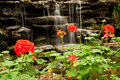 Free Waterfall And Flower Stock Photo - 15678800