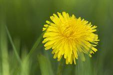 Free Dandelion Stock Image - 15670651