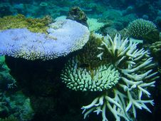 Free Underwater Corals Royalty Free Stock Image - 15673196
