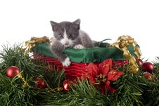 Kitty In A Christmas Basket Royalty Free Stock Photo