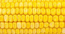 Detail Of Corn Stock Image