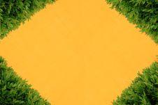Free Yellow Wall And Bush Royalty Free Stock Photos - 15675868