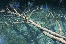 Free Tree In A Lake From Plitvice Stock Photography - 15676002