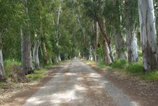 Free Forest Road Stock Images - 15676714