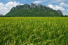 Rice Field In North Of Thailand Stock Photo