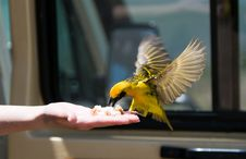 Free Bird Royalty Free Stock Image - 15678436