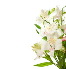 Free Bouquet Of Alstroemeria Flowers Royalty Free Stock Photo - 15678935