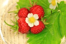 Free Fragrant Wild Strawberries Stock Photos - 15679113