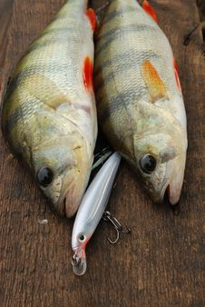 Free Two Perch Caught On Wobbler Stock Image - 15679241