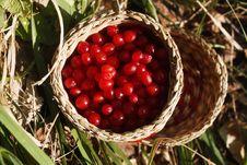Free Berries Royalty Free Stock Photo - 15679595
