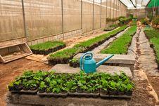 Free Vegetable Planting In Modern Farm Stock Photo - 15679870