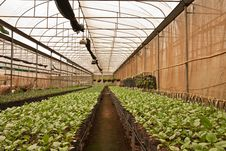 Free Vegetable Planting In Modern Farm Stock Photo - 15679920