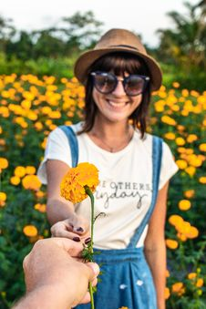 Free Man Gifting A Marigold Flower To Girl On A Marigold Field. Man Hand With Yellow Flower. Stock Photography - 156728162