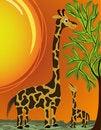 Free Mommy And Baby Giraffe Stock Photo - 15686120