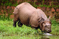 Free Rhino Bathing In River Royalty Free Stock Photo - 15688235