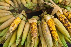 Free Corn Stock Image - 15680701