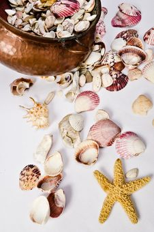 Cooper Pot, Shellstar, And  Seashell Collection Royalty Free Stock Photo