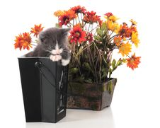 Free Potted Kitty Stock Image - 15687961
