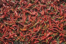 Free Red Chili Stock Photo - 15688430