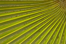 Free Pattern Of Palm Leaf Royalty Free Stock Image - 15688646