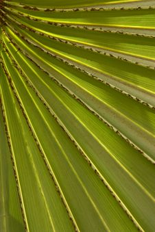 Free Pattern Of Palm Leaf Stock Images - 15688714