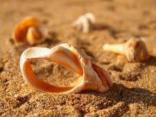 Some Old Seashells On The Sand Royalty Free Stock Photos