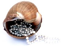Free Pearls And Shell Royalty Free Stock Photo - 15689995