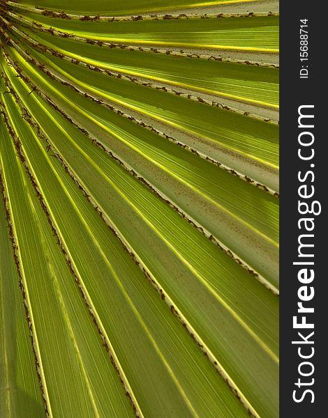Pattern of palm leaf