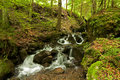 Free Brook In A Forest Royalty Free Stock Image - 15695286