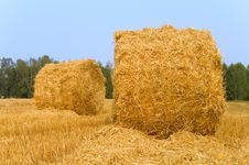 Free Meadow Of Hay Bales Royalty Free Stock Photos - 15690488